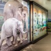 Glass at Oregon Zoo Reveals the Elephant in the Room